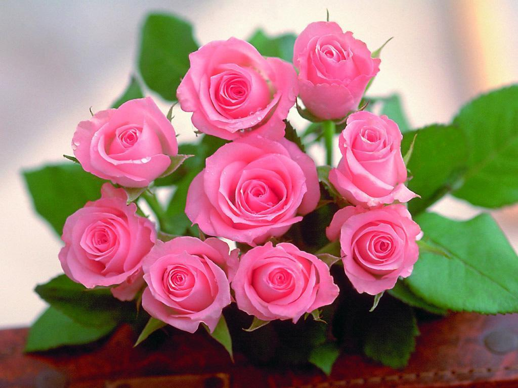 Beautiful love rose photo collection 16 rose flower pictures beautiful love rose photo collection 16 rose flower pictures izmirmasajfo
