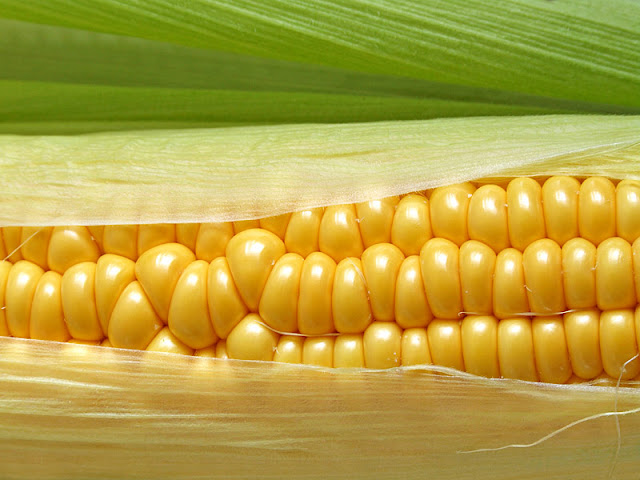 Corn macro shot