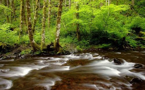 Foto-Foto Hutan Hujan Terbaik