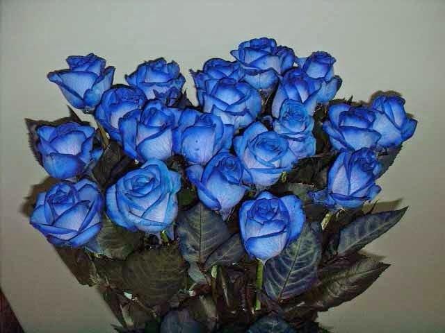 Как самому сделать синие розы