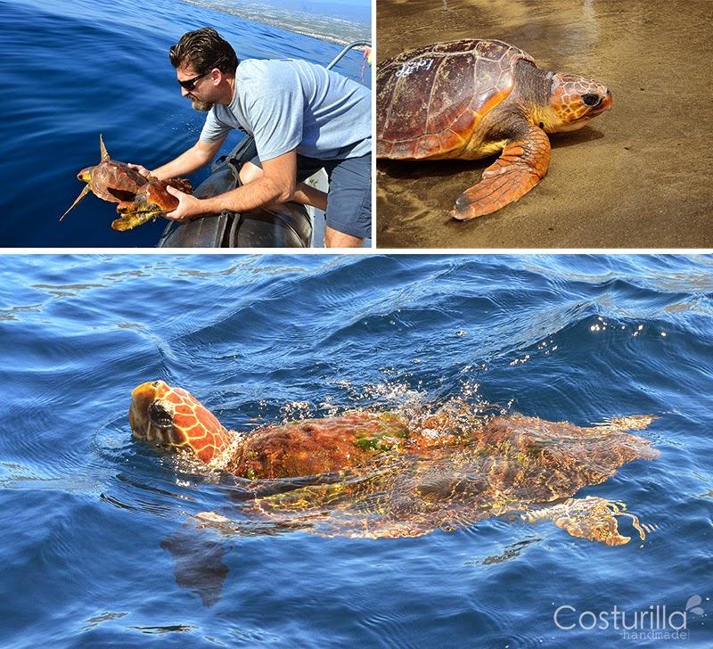 suelta-tortugas-tenerife