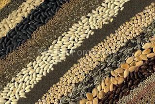 Στη Φυλακή Και Βαριά Πρόστιμα Όποιος Καλλιεργεί «Παράνομους» Σπόρους !!