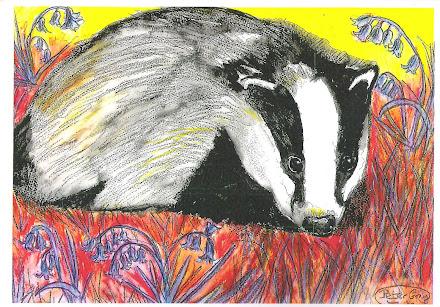 Badger in bluebells pic