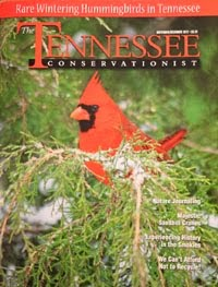 Tennessee's Majestic Sandhill Cranes
