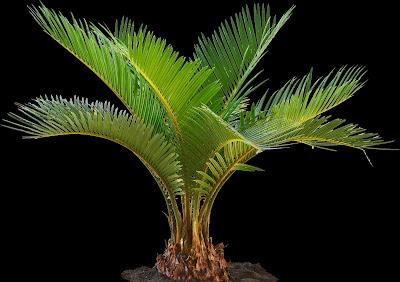 cut out palms part #1