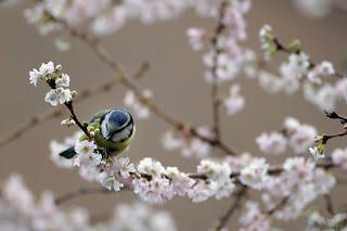 Chú chim xanh
