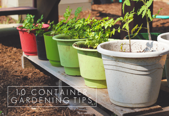 10 Container Gardening Tips // Bubby & Bean