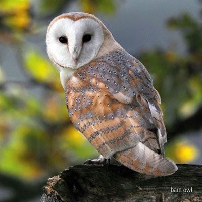 horned owl tattoos