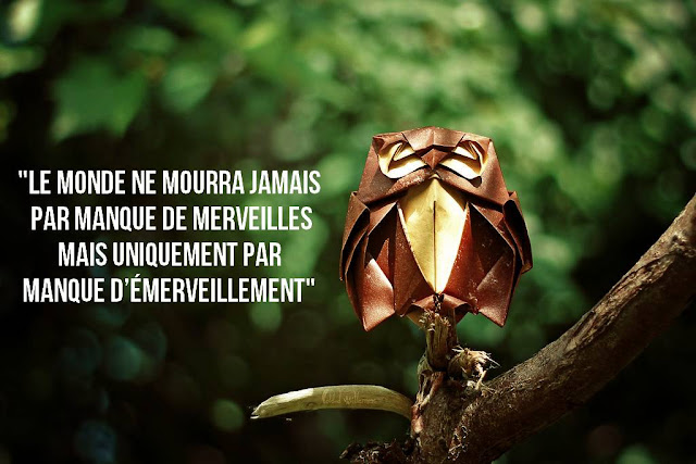 60 proverbe citation manque