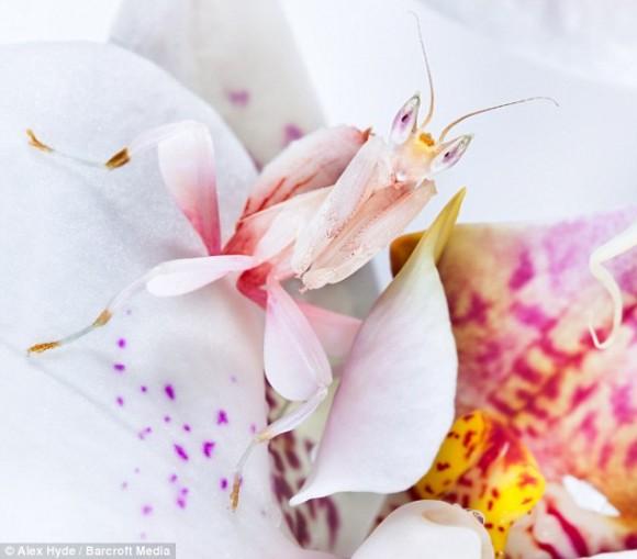 أجمل حشرات العالم