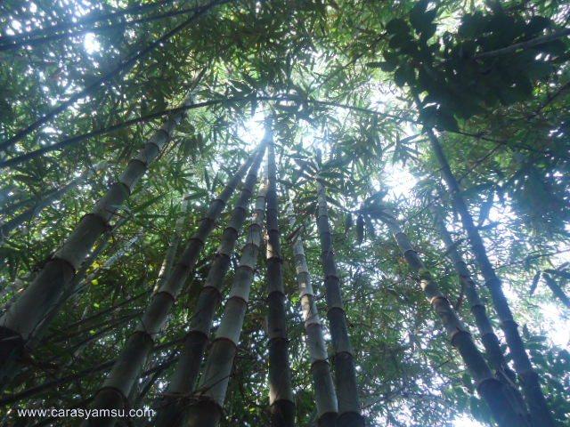 Pemandangan Indah Kebun Bambu