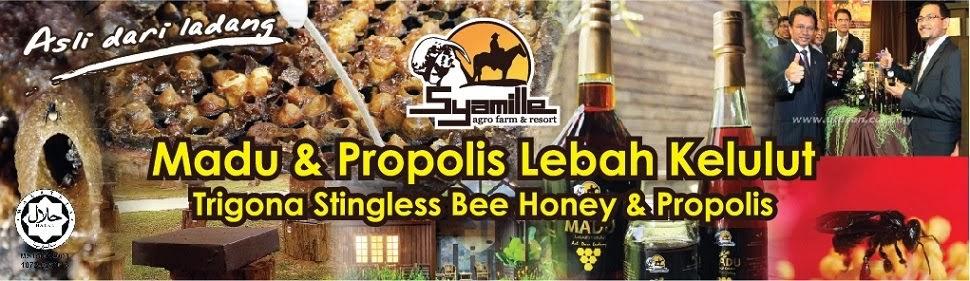 Syamille Lebah Kelulut Malaysia
