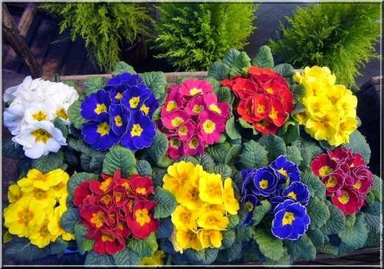 Quelles plantes et fleurs pour un jardin d hiver fleuri for Fleurs du jardin vivaces