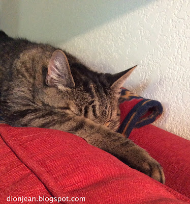 Brown cat pretending to sleep on red couch