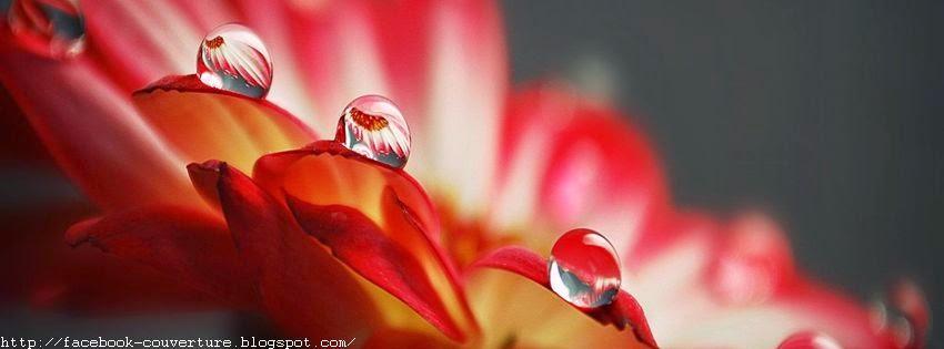 Belle image pour couverture facebook avec goutte d'eau sur fleur
