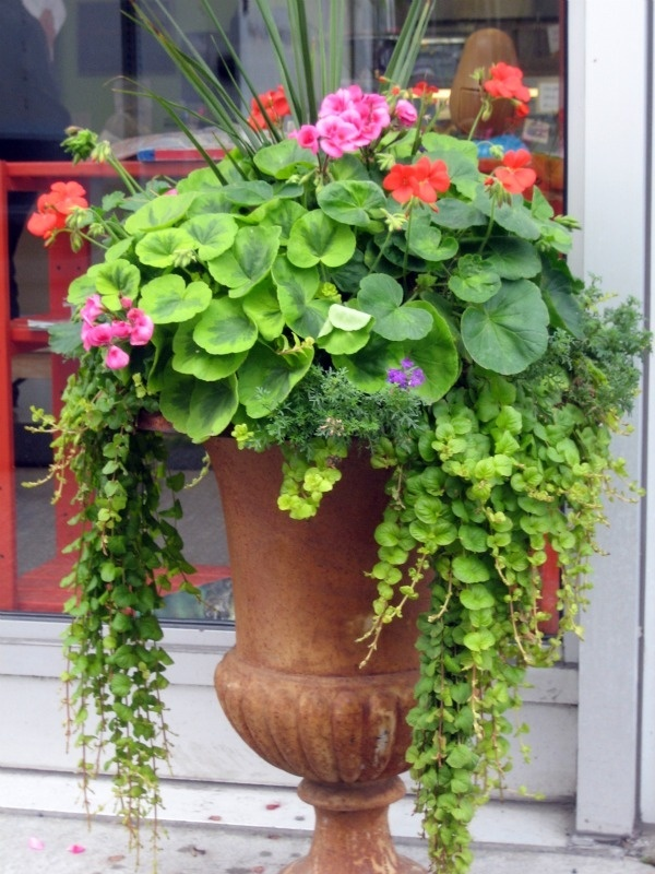 10 spectacular container gardening ideas for Garden planter ideas