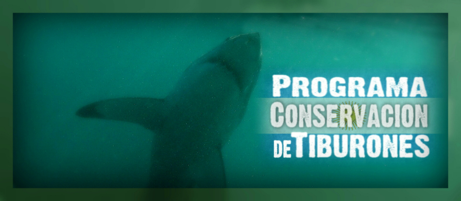 Programa Conservacion de Tiburones