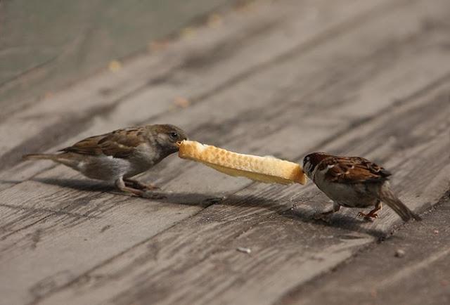 可愛鳥趣圖(二) - 亮麗 - 亮麗的博客