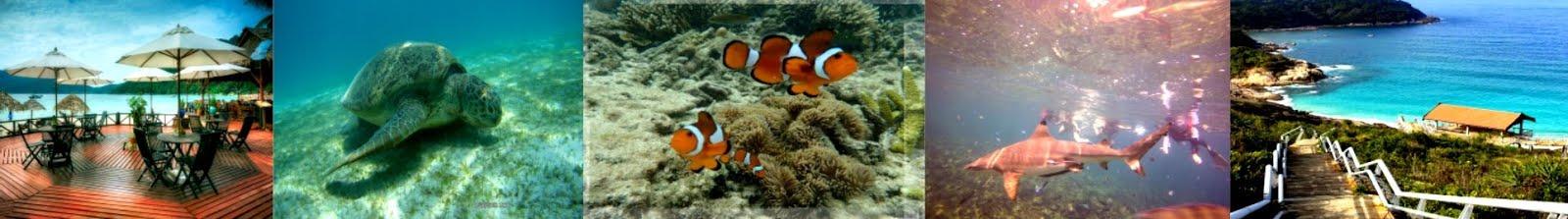 PERHENTIAN SEALIFE TRAVEL | Bajet Pakej Pulau Perhentian