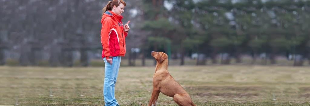 Los Perros Obedientes
