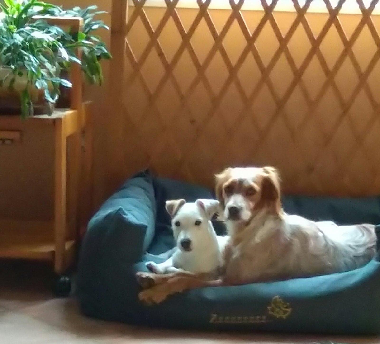 Une nouvelle amie pour Ginger