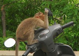 Funny Monkey Looking In Mirror