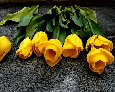 Yellow Tulips Wallpaper