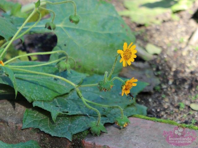 plantas medicinais jardim botanico:Já o Gervão-Roxo atua nos sistemas digestório e respiratório como