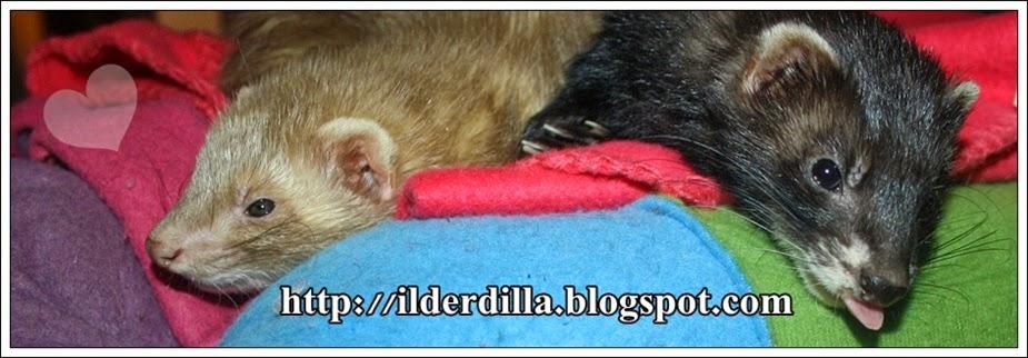 A ferret blog!