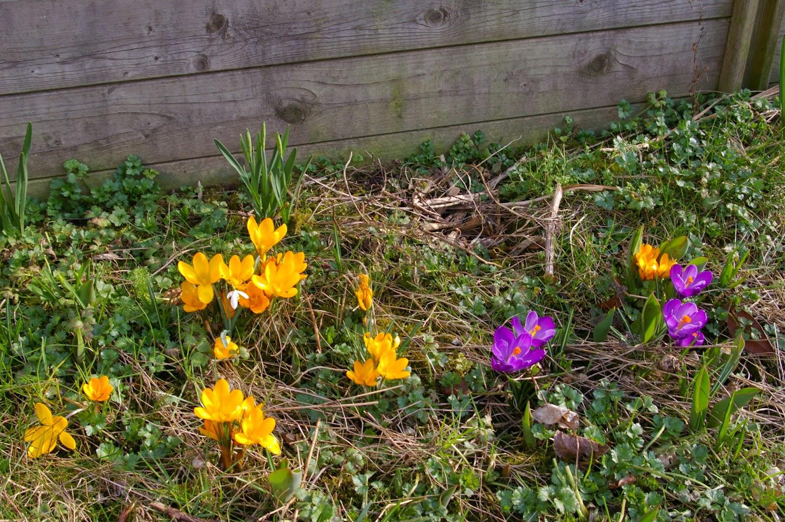 Le jardin de ryuma mars 2015 for Jardin mars 2015