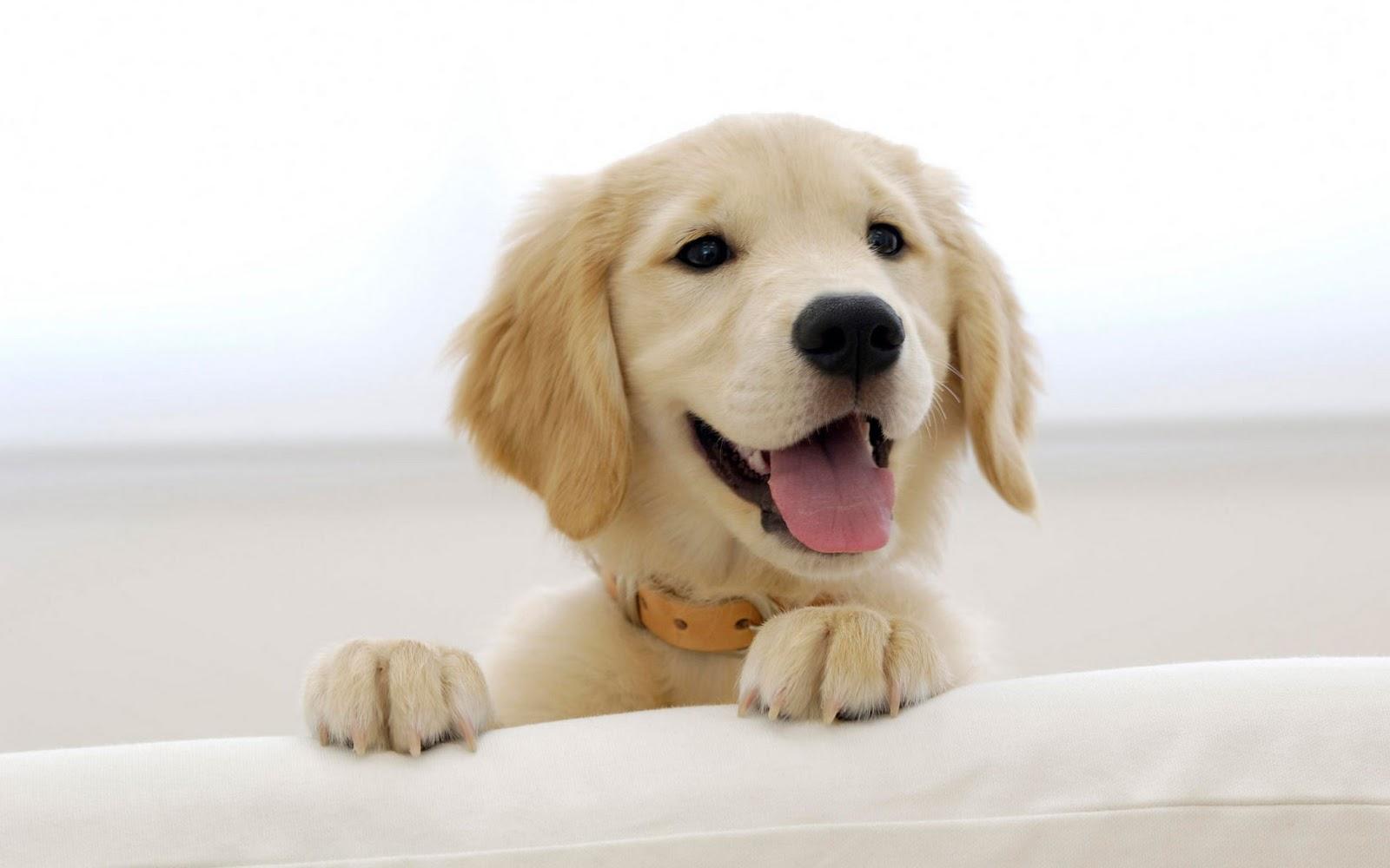 http://1.bp.blogspot.com/-Q39fD_AzfNs/T9hsXBnVIfI/AAAAAAAAGr4/ncTsXeQYilY/s1600/Dog+Wallpaper+007.jpg