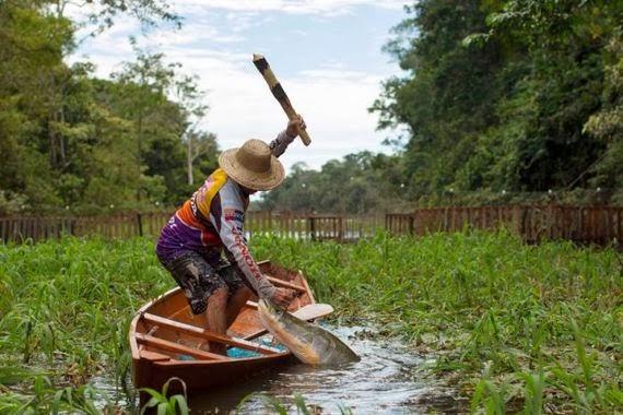 memancing ikan yang dikenali sebagai arapaima di kawasan brazil ikan