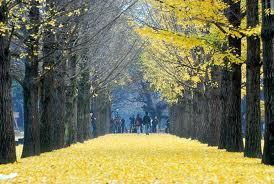 paket tour korea, paket tour muslim korea, paket tour wisata korea, paket wisata murah 2013,