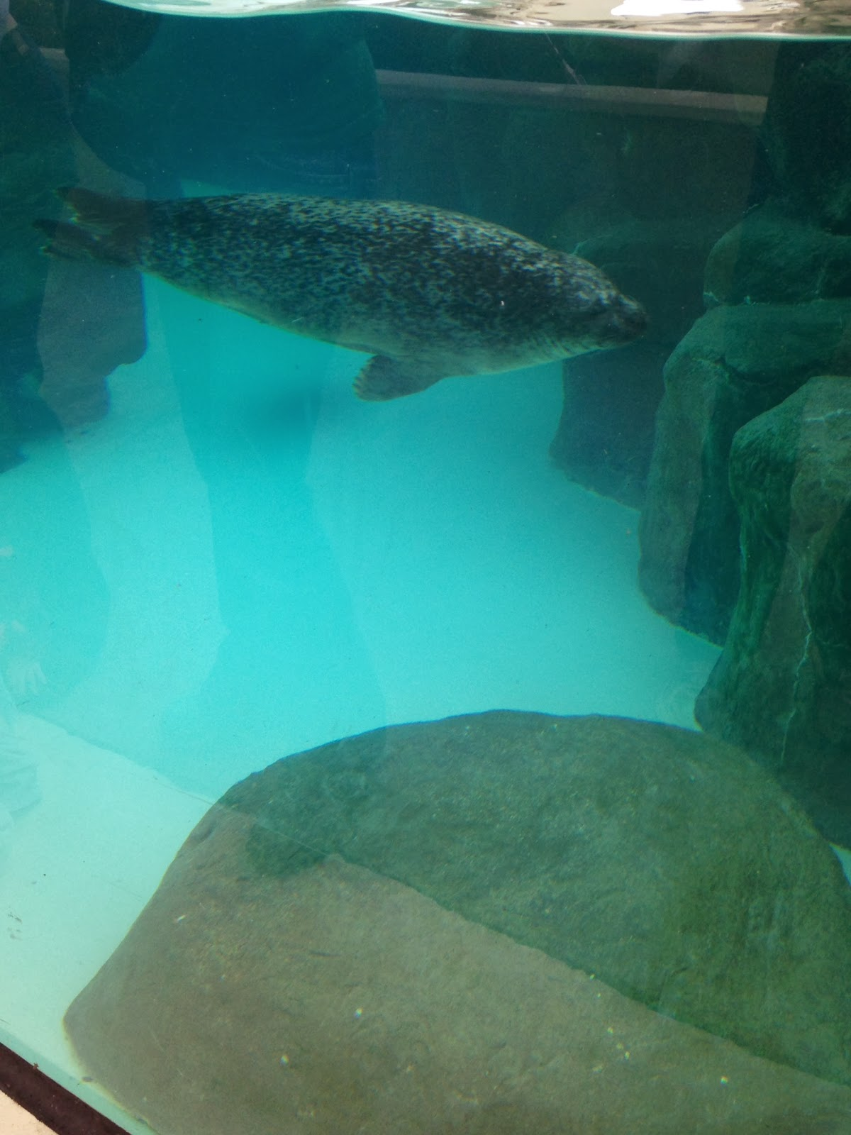 Virginia Beach Aquarium Seals