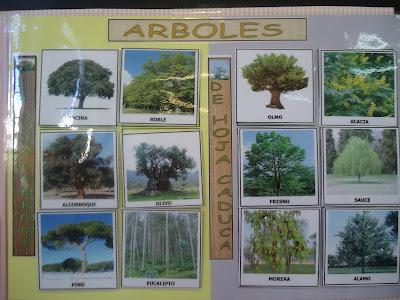 Los peques del cole un d a nos queda para la primavera for Arboles de hoja caduca y perenne nombres