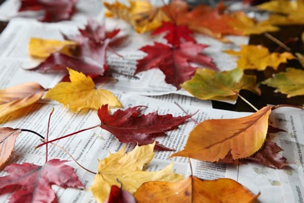 How to preserve autumn leaves in beeswax featured @hearthandmadeuk