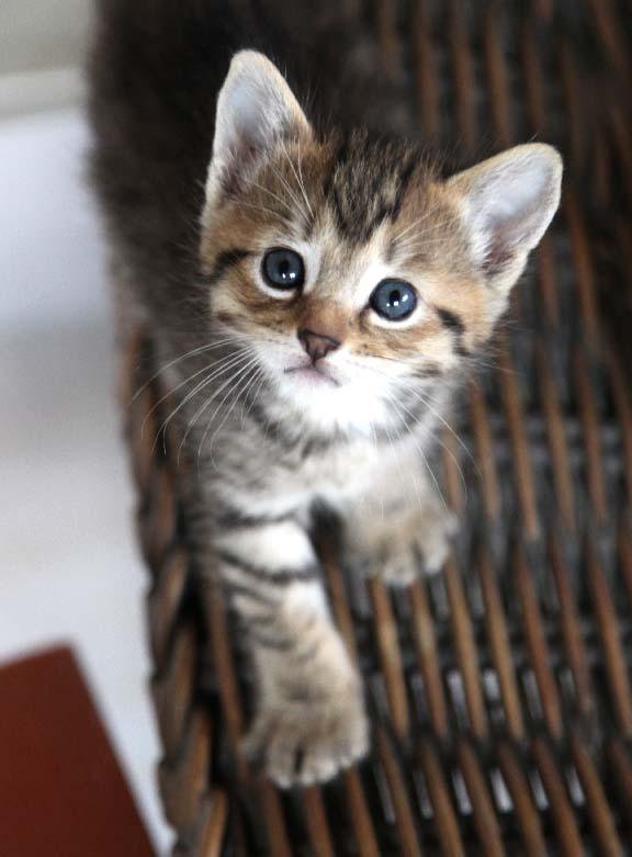 Taking Kitten From Mother Cat