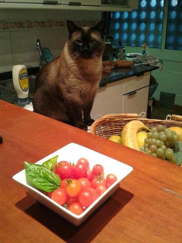 Chicho en la cocina