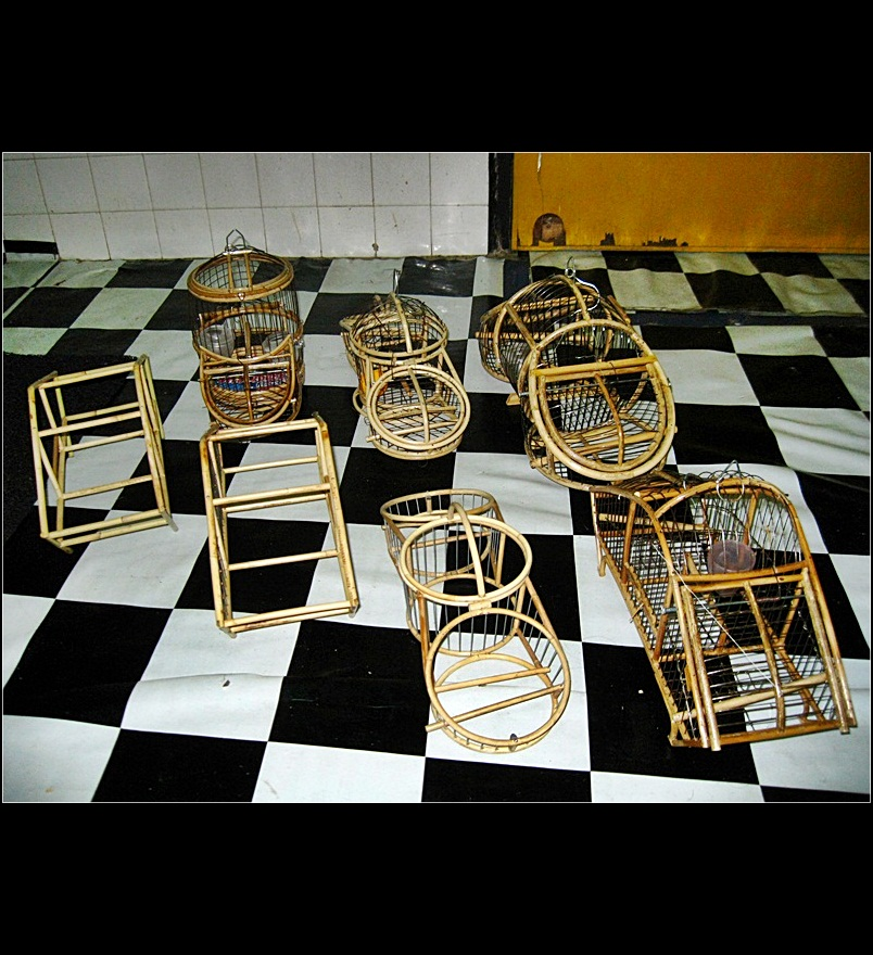 zam ajuli lensa hobbies and collections