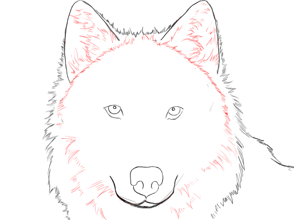 How To Draw Wolf Jpg 1024x768 Face Wolf Drawings
