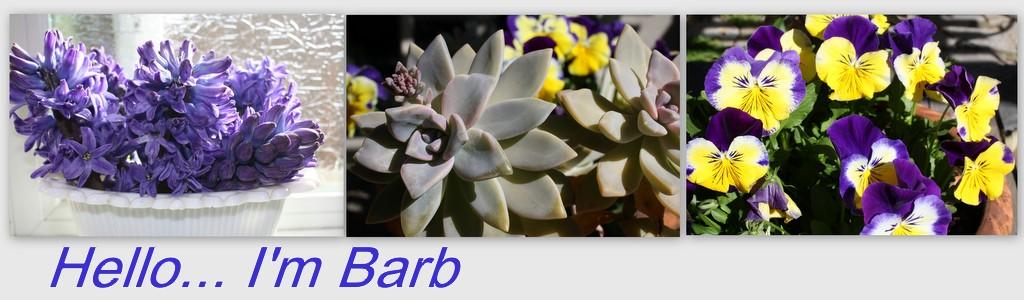Hello...I'm Barb