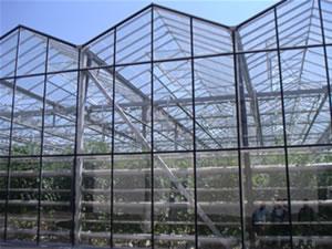 Fitosofia agricultura holandesa - Invernaderos de cristal ...