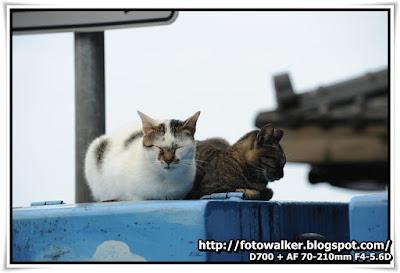 九份猫狗 (Cats & Dogs@Jiufen)