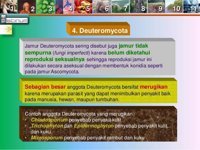 Jamur Deuteromycota