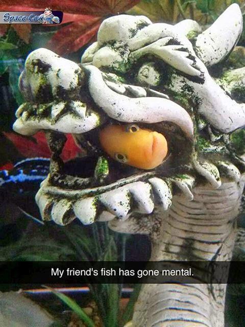 funny fish picture humor