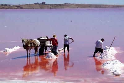8 Danau Berwarna Pink