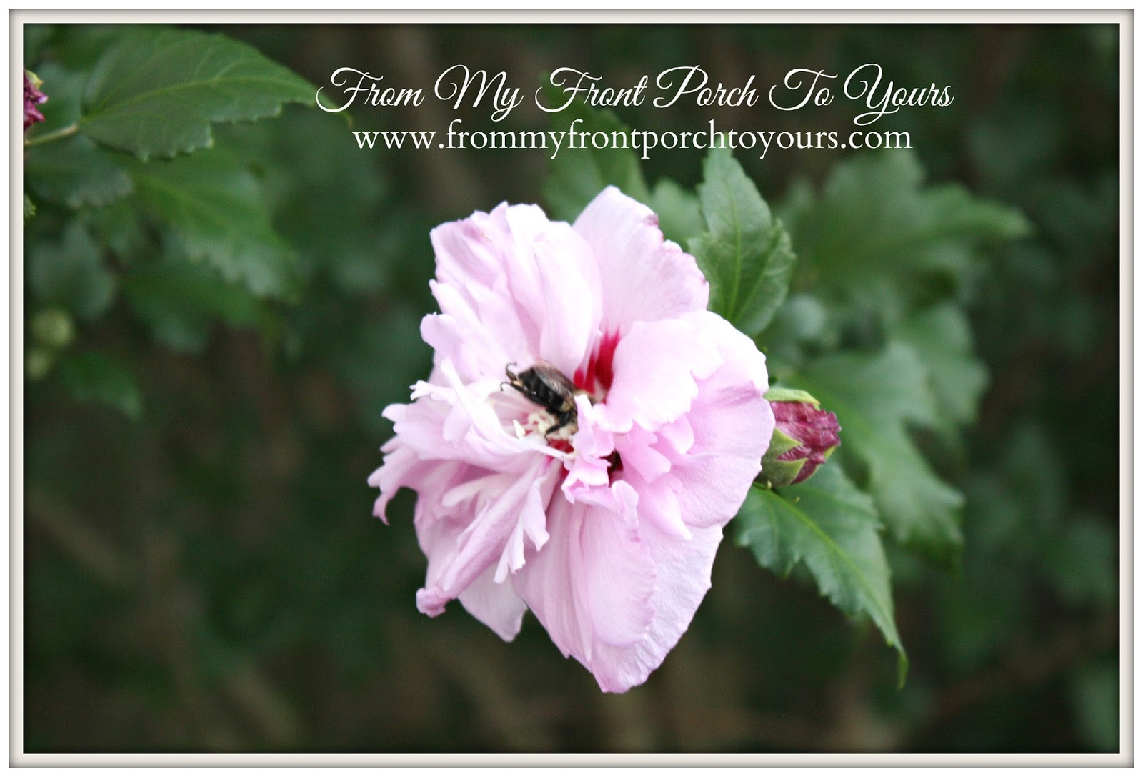 From My Front Porch To Yours- Flower Garden Bee