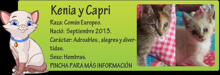 http://mirada-animal-toledo.blogspot.com.es/2013/11/brandy-betsy-kenia-kara-y-capri.html