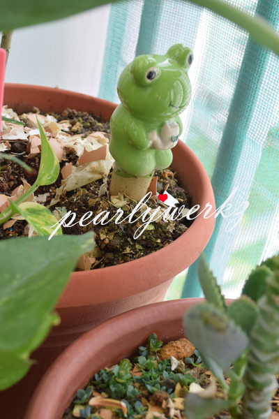My Mini Plant Collection With Help From 15 Daiso Products