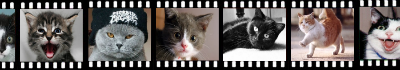 filmulete cu pisici